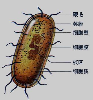 简述真核细胞的基本结构体系