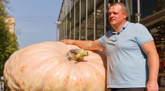战斗民族的蔬菜!俄最大南瓜重达645.5公斤