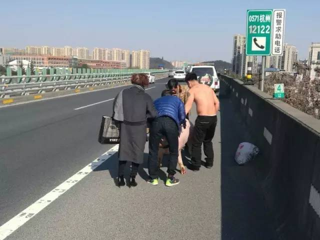 """【转】北京时间      男子高速路上赤裸上身用衣服套猪脖""""抓猪"""" - 妙康居士 - 妙康居士~晴樵雪读的博客"""