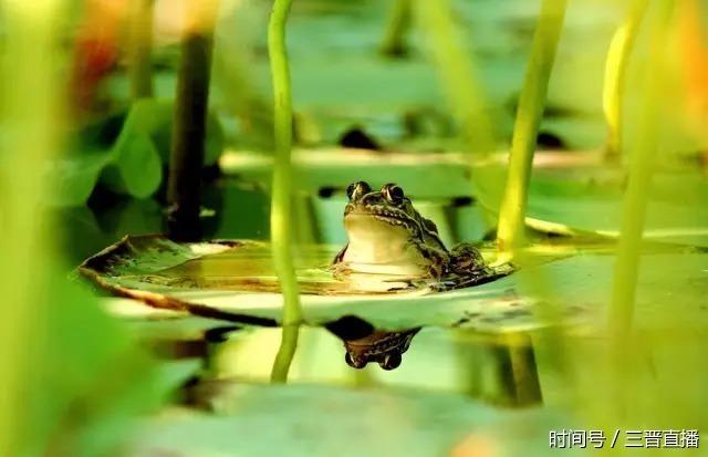 """[转载]浸泡在农药里的中国,""""毒""""中之最的蔬菜竟然是这个 - 烟圈 - 烟圈的博客"""