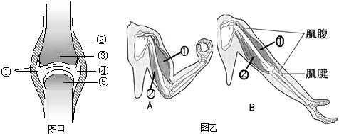 (1)写出图中序号代表的结构