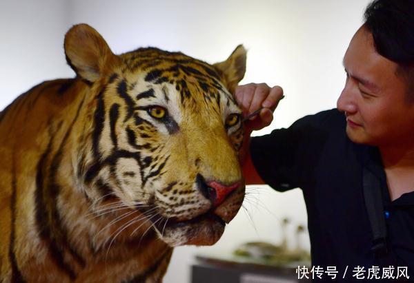 年轻的动物标本制作艺术师郑孙凡为参加第四届中国动物标本大赛的东北