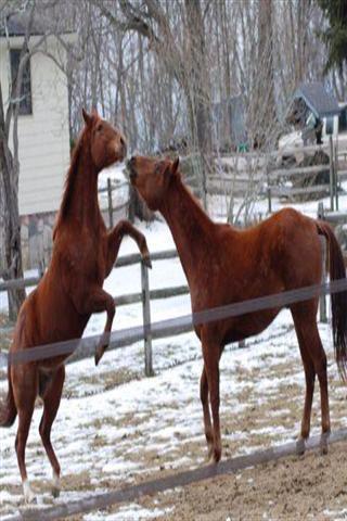 壁纸 动物 马 骑马 320_480 竖版 竖屏 手机