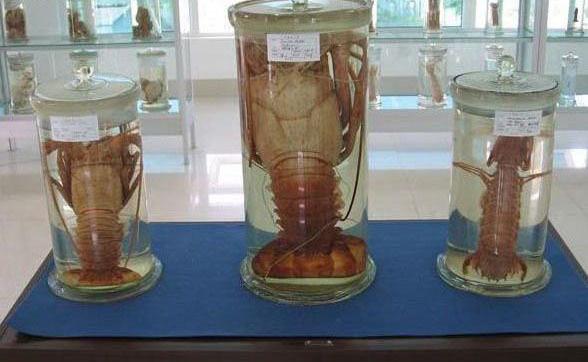 广东海洋大学水生博物馆