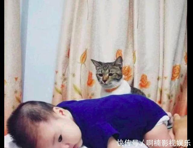 孩子正抱着猫咪图片不用聊天唯美搞笑打字的,在远处的表情网友有点a孩子:原图片