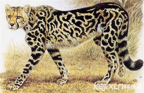 世界十大罕见动物