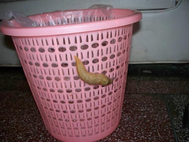 垃圾桶 620_465