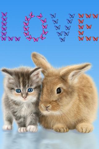 猫和兔子.可爱的壁纸.app1.0.0_android手机版下载_宝
