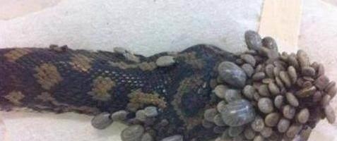 男子在家附近的农田发现一条蛇,身上却长满了石子,石子竟还会动
