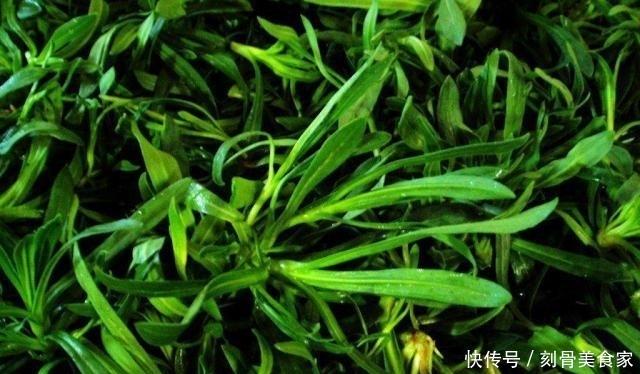 """黄河流域一种""""面条草"""",喜欢长在盐碱地,北方人爱吃,价值珍贵"""