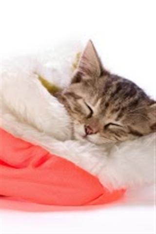 手机锁屏壁纸可爱猫咪主屏幕