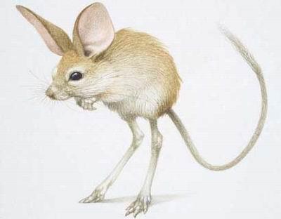 动物病毒手绘图