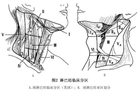 淋巴结是哺乳类动物特有的器官