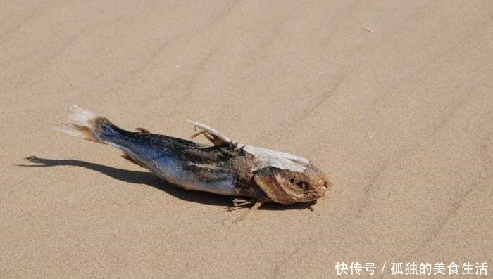 """<b>命最""""硬""""的鱼,在沙漠里挣扎了5万年,人类看不下去出手相助</b>"""