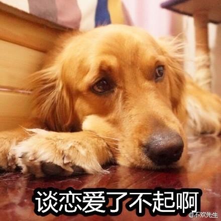 单身狗表情包.jpg