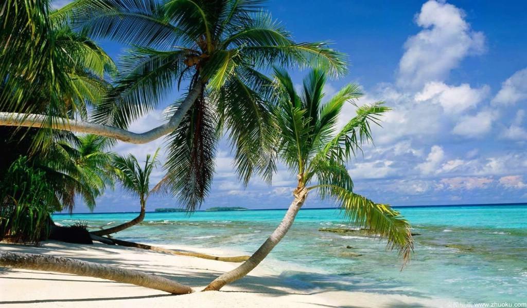 椰子树广泛分布于亚洲