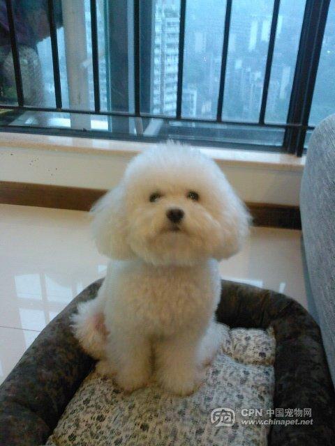 世界最可爱的狗