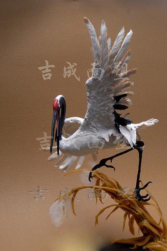 鹤舞白沙图片 - 百度