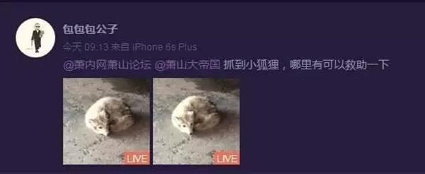 【转】北京时间      白狐闯入杭州一高中被赶跑 专家:或来自北极 - 妙康居士 - 妙康居士~晴樵雪读的博客