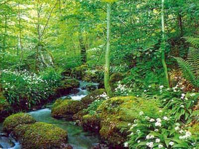 白虎涧自然风景区