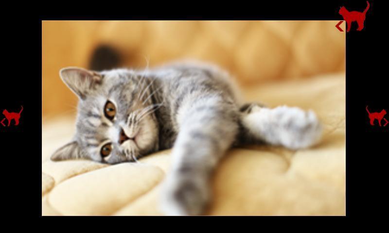 的猫科动物的图像