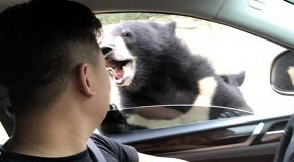 游客在八达岭动物园开窗投食 被黑熊咬伤手臂