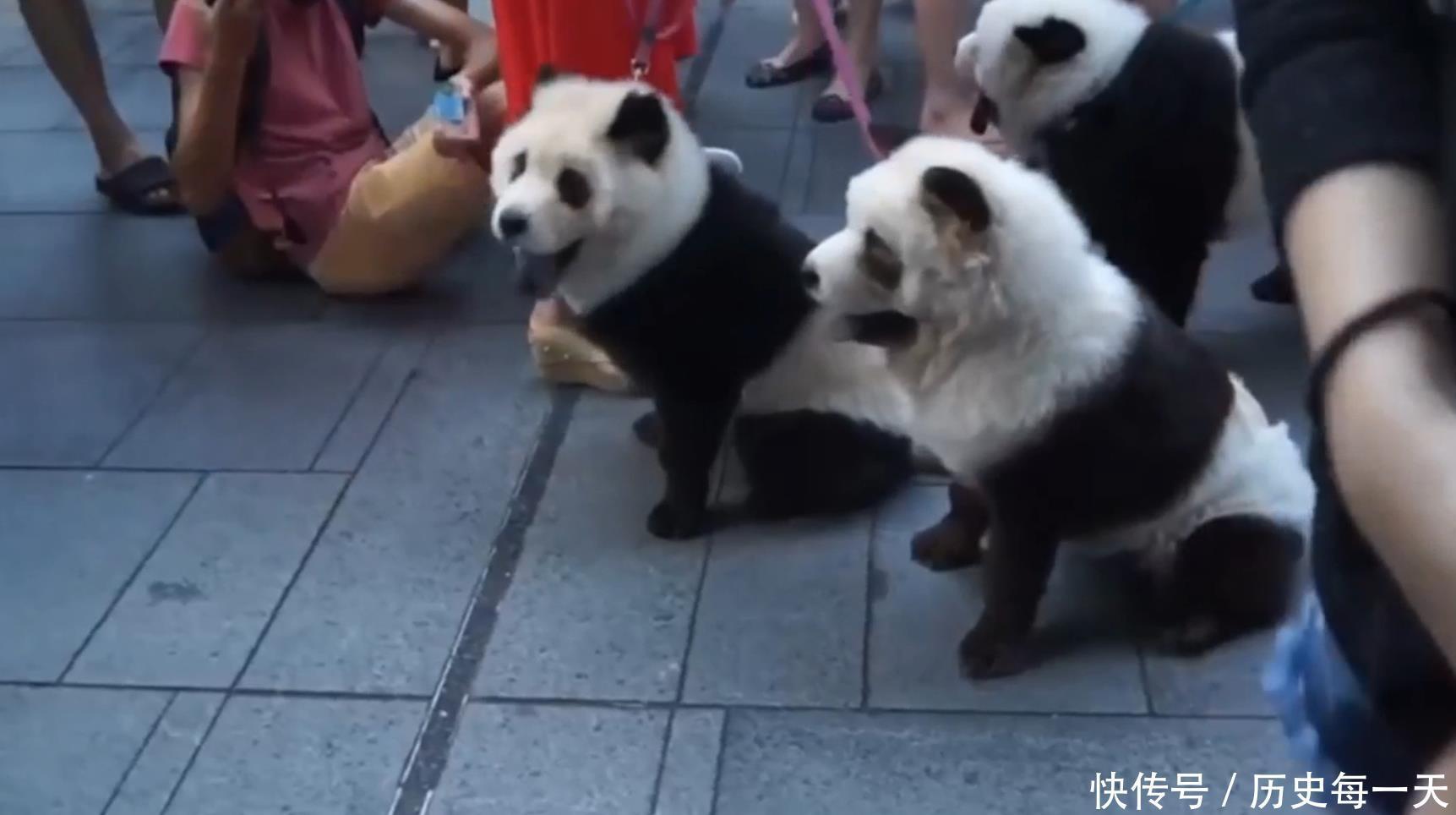 外国街头出现大熊猫,大妈看到后立马报警,谁知竟是一场乌龙