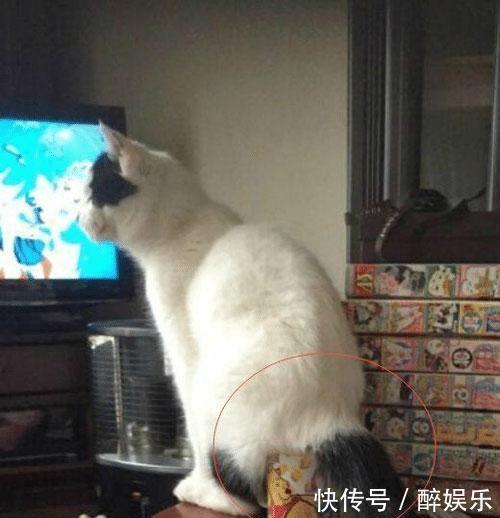 主人打开监控一看,摇头表示猫没救了,网友偷笑:家里有二哈吧