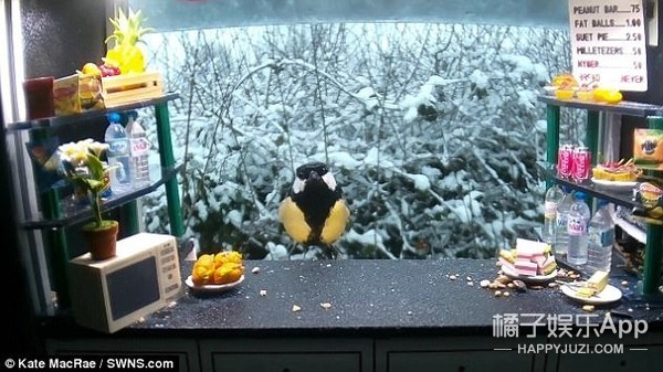 同样是喂鸟,这位摄影师却给它们创造了一个小吃店