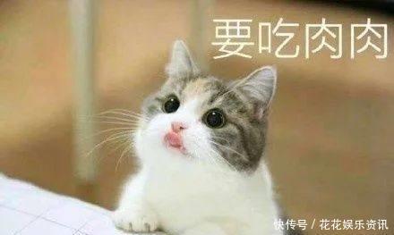 猫:是谁,是谁阻挡1了朕与网友的亲密v网友?美食就表情包掏空身体被像图片