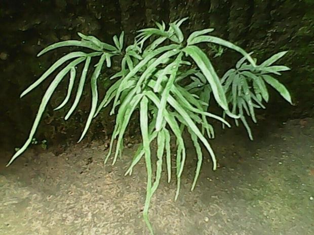 请教图中植物名称,_360问答
