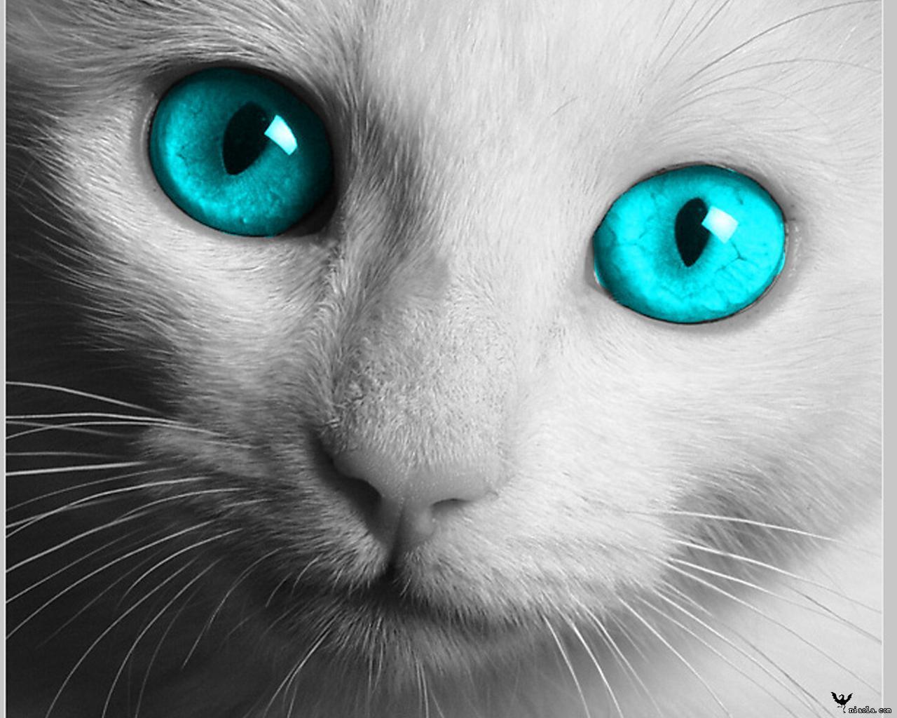 手绘动物萌眼睛