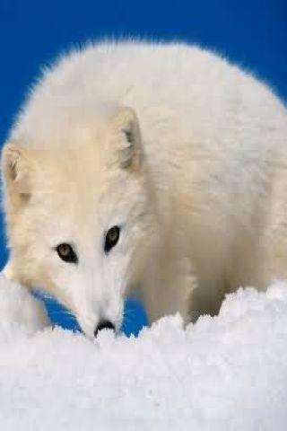 野生动物图片_360手机助手
