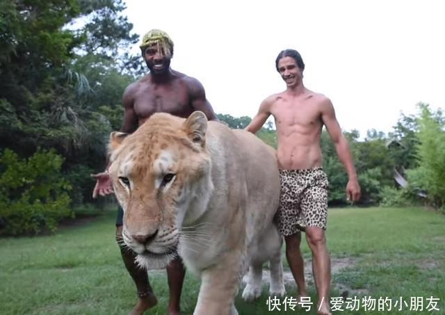 <b>狮虎兽的身体真的会一直长,长成远古巨兽的模样吗?</b>