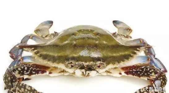 还在吃香辣蟹清蒸蟹?来看看最特殊的三种螃蟹做法!
