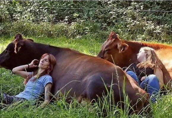 拥抱奶牛和山羊瑜伽,有趣的动物创业项目