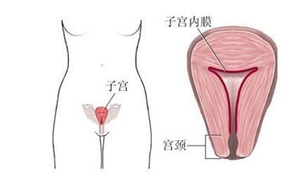 子宫在什么部位图解