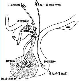 腺+��\y���l9�.����(c9��_腺垂体