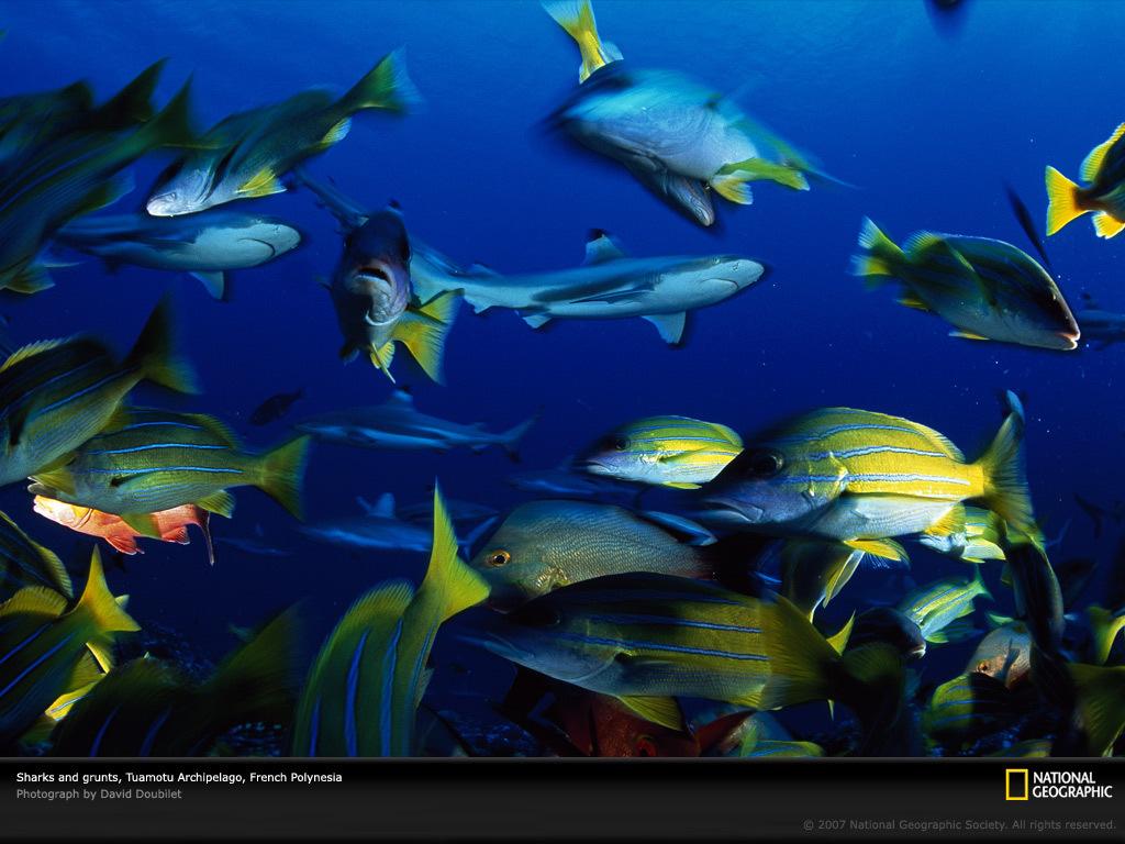 众多的海洋生物提供了庇