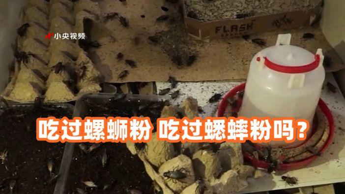 吃过螺蛳粉 吃过蟋蟀粉吗?