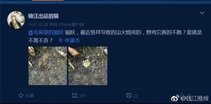 【转】北京时间     被烧死的野鸡,身下护着一窝蛋… - 妙康居士 - 妙康居士~晴樵雪读的博客