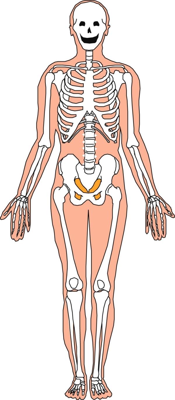 骨字的结构