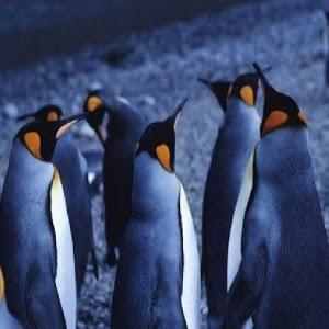 有趣的动物世界图片