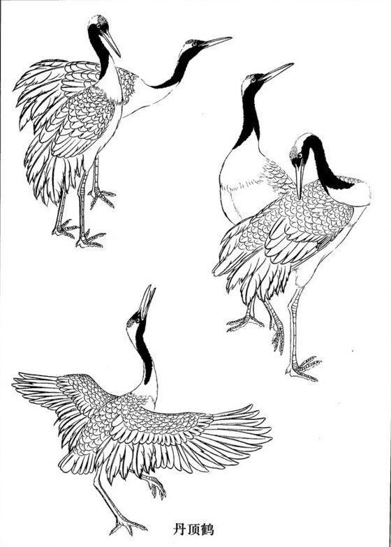 一只展翅飞翔丹顶鹤怎么画