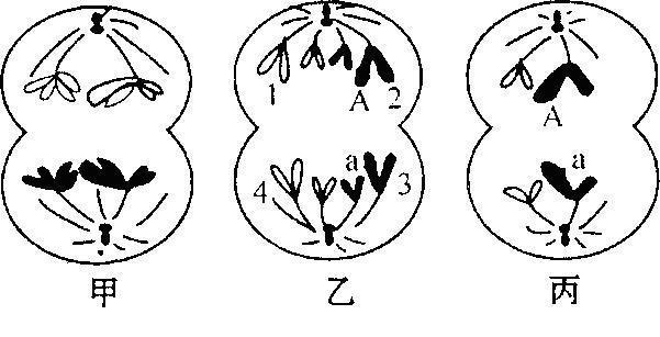 手绘动物细胞模型图片