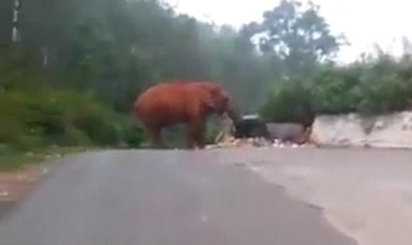 印遭遇百年一遇旱灾 大象路边吃垃圾为生 -  - 真光 的博客