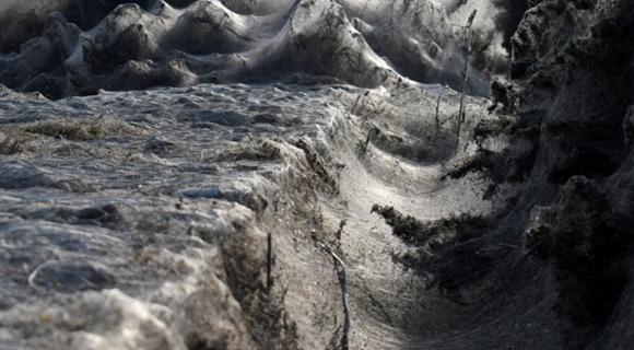 希腊河岸大面积灌木被蜘蛛网吞噬 如海浪