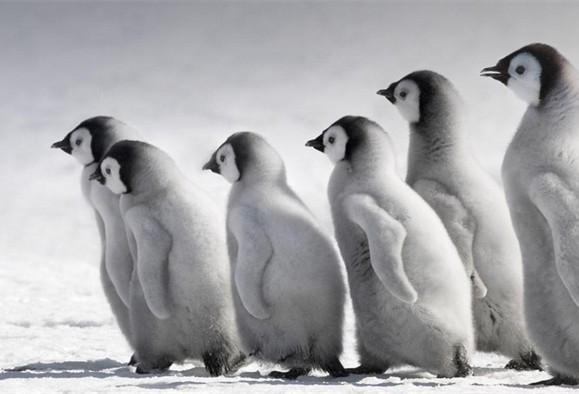 电影《帝企鹅日记》:美轮美奂的写意画
