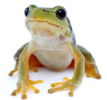 号儿蛙手绘图