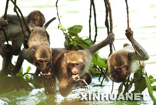 隆安县旅游景区有省级风景名胜,南宁市十大景观之一的龙虎山自然保护